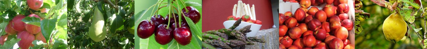 Eine Panorma-Ansicht unserer verschiedenen Obstsorten.